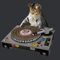 Первая в мире вертушка для твоего Кота! Поскретчил, а заодно и поточил ногти :)